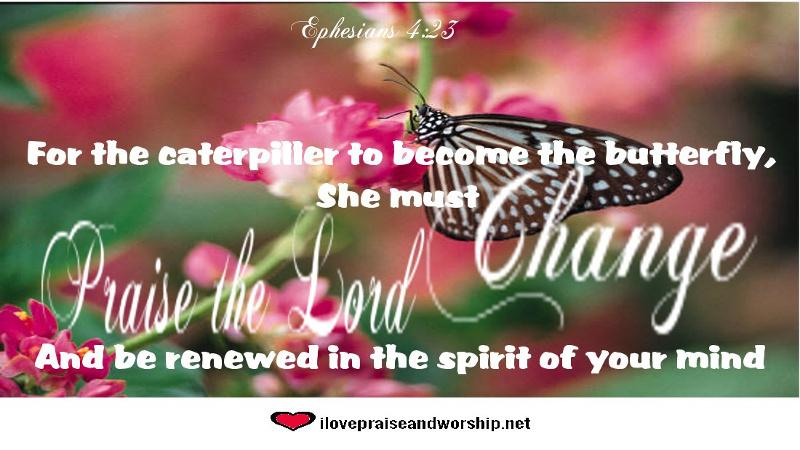 Renewed Like AButterfly